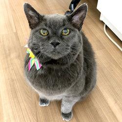 Jetta The Cat