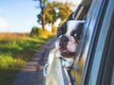 No Barking Allowed: Traveling With Dogs