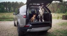 Land Rover lance une gamme d'accessoires pour les animaux