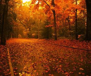 Conduire en automne : attention aux feuilles glissantes!