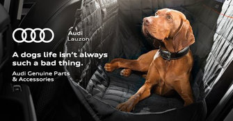 Safe transport for your four-legged friend
