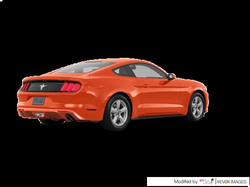 Competition Orange